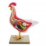 Bird Dissection (Domestic Hen) Model